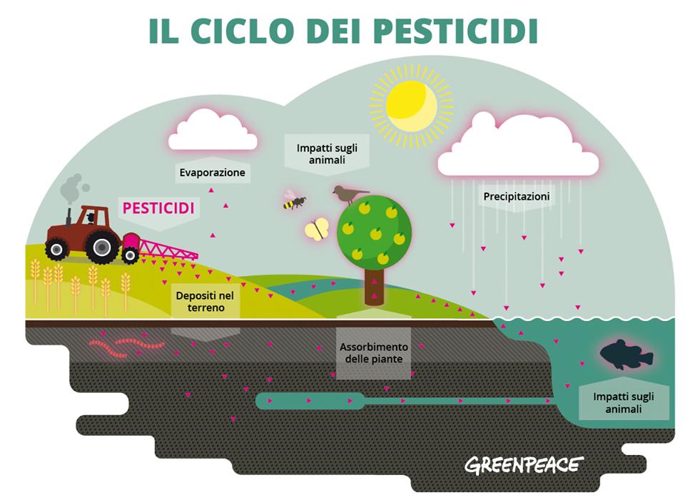 ciclo_pesticidi