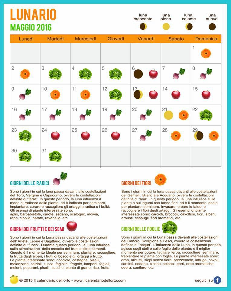 L 39 orto e il giardino di maggio 2016 marcheplace le - Semina pomodori luna ...