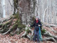 Giornata Nazionale degli Alberi- Un albero per il clima